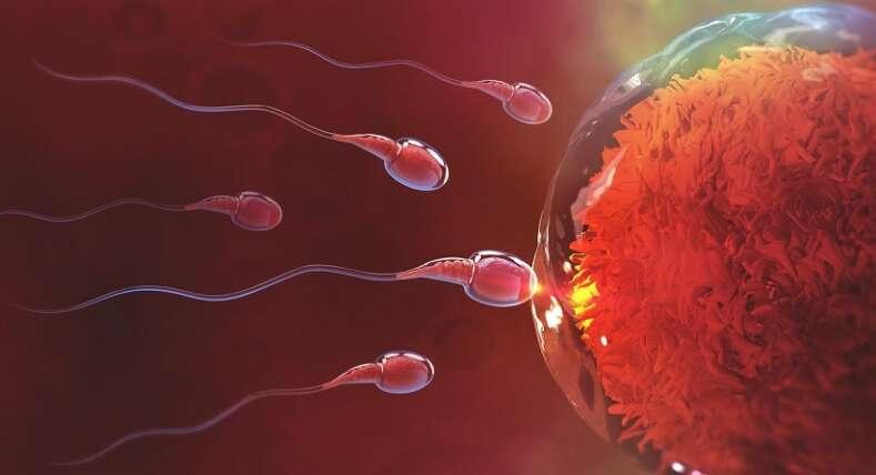 spermcount
